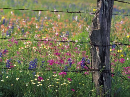 darrell-gulin-fence-post-and-wildflowers-lytle-texas-usa
