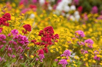 irish_wildflowers_4516