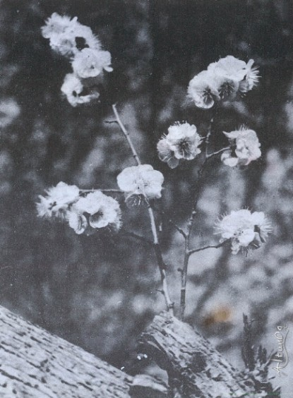 TARIM_1985-6